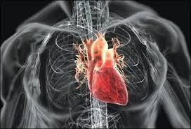 The Heart is Not a Pump – The Blood Pumps the Heart